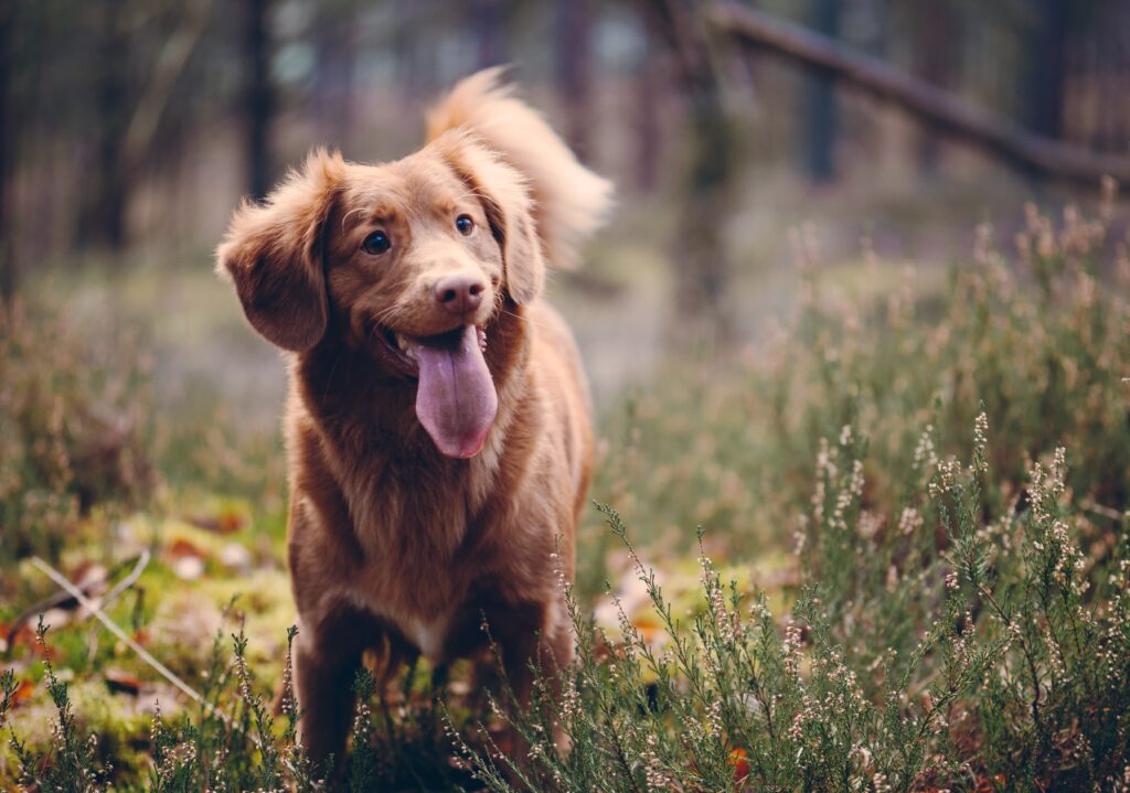We provide dog friendly rooms at Brathay Lodge, Ambleside in the English Lake District