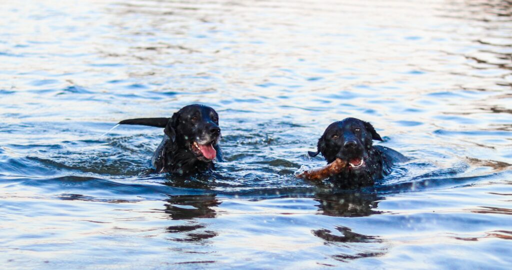 Dogs can have great fun and freedom in the Lake District