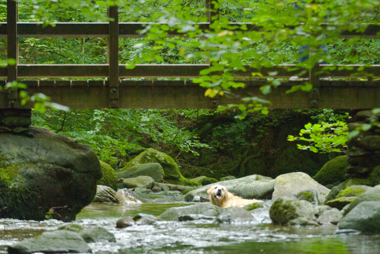 Dogs love a splash, stunning dog walks in the Lake district