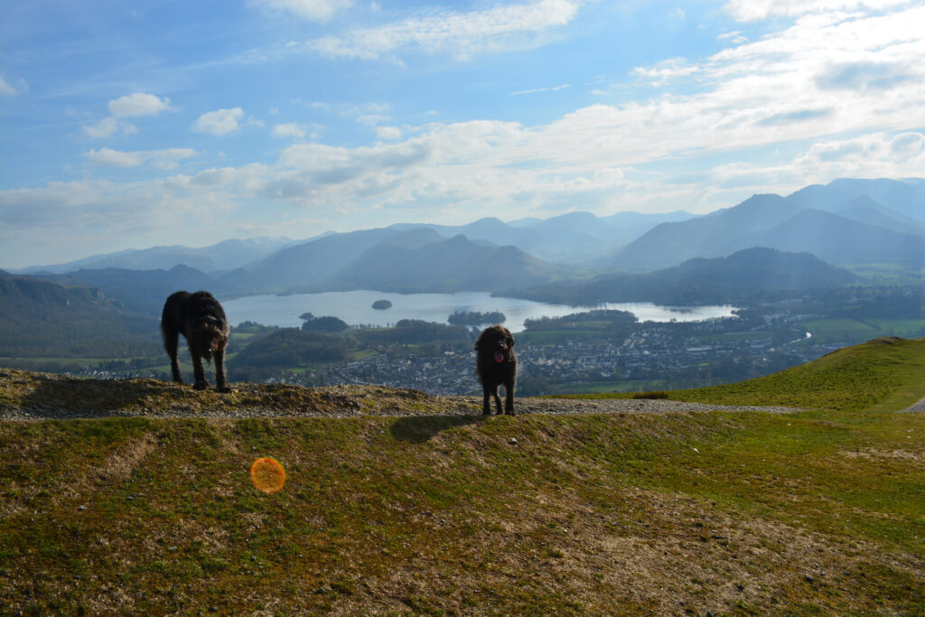 A dogs view of the Lakes